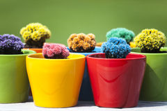 Small colored cacti Royalty Free Stock Photography