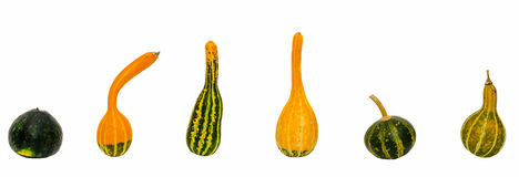 Small colored pumpkins, close up, isolated, white background Stock Photos