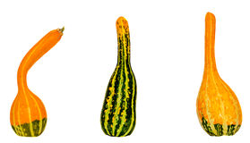 Small colored pumpkins, close up, isolated, white background Royalty Free Stock Images