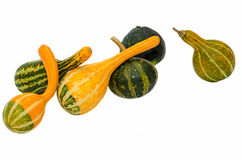 Small colored pumpkins, close up, isolated, white background Royalty Free Stock Photo