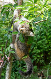 Small colorful cat. Small colored cat on a young fruit tree Royalty Free Stock Image