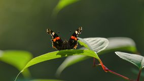 BUTTERFLY. A small colorful creature on a leaf Royalty Free Stock Image