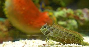 Small Colorful Deep Sea Fish In Aquarium stock video footage