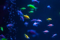Small colorful fish underwater stock photos