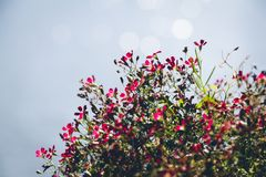 Small colorful flowers with bokeh background royalty free stock photos