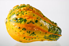 Small Colorful Gourd Royalty Free Stock Photography
