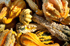 Small, Colorful Gourds Royalty Free Stock Images