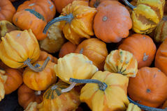 Small colorful gourds Royalty Free Stock Photography