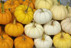 Small, colorful pumpkins. Small pumpkins, white, yellow and orange, at a market in Bangkok, Thailand Stock Images