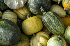Small colorful pumpkins stock images