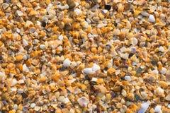 Small colorful sea shells on sea beach Stock Photos