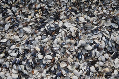 Small colorful seashells. A lot of little colored shells on the sea shore Stock Image