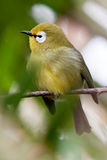 Small colorful tropical bird on a branch Stock Photography