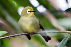Small Colorful Tropical Bird On A Branch Royalty Free Stock Image