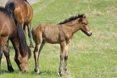 Small colt. In the ranch to play a small colt Royalty Free Stock Photo