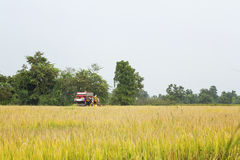Small combine harvester harvesting wheat Stock Photo