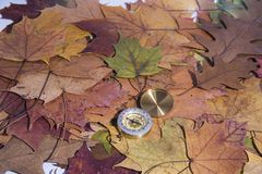 Small compass on falling maple leaves. Navigation abstract photo.  stock photography
