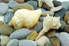 Small composition with two seashells and cobbles. A very simple composition with two trumpet seashell and some cobbles stock image