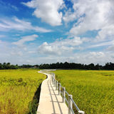 Small concrete bridge walkway through golden rice fields with clouds and blue sky. Into the village Stock Images