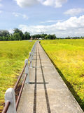 Small concrete bridge walkway through golden rice fields with clouds and blue sky. Into the village Royalty Free Stock Photography