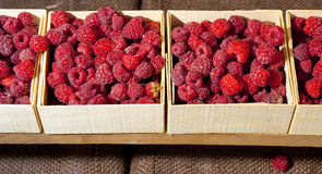 Small containers of raspberries ready for sale Stock Images