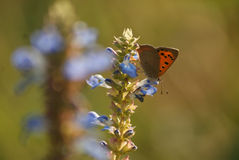 Small copper Royalty Free Stock Photo