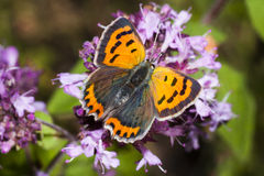 Small copper Royalty Free Stock Photography