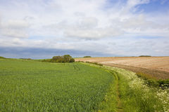 Small copse and footpath Stock Images