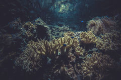 Small coral reef ecosystem Stock Photography