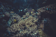 Small coral reef ecosystem Royalty Free Stock Photo