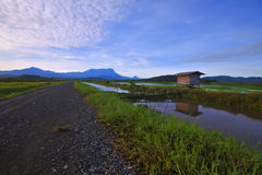 Small cottage on the edge of rice fields Stock Images