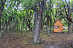 Small cottage in the forest Royalty Free Stock Image