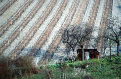 Small cottage in the vineyard in Savoy, France Stock Photo