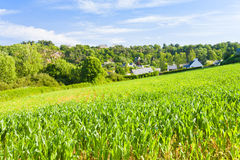 Small country corn field Royalty Free Stock Images