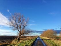 Small country road with fields, bare trees and open sky in Lincolnshire. A small country lane stretches into the distance in Lincolnshire, England. There are a stock image