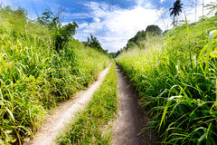 Small country road through lush foliage. In Vanuatu royalty free stock images