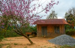 Small countryside house with cherry tree stock photos