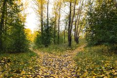 A small, covered with fallen leaves, the path is divided into tw stock photo