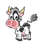 Small cow. Small caw on white background - color illustration Royalty Free Stock Images