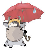 A small cow and an umbrella. Cartoon Royalty Free Stock Image