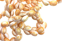 Small Cowry Shell Necklace Close View Royalty Free Stock Photos
