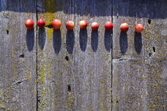 Small crab apples line on old wooden used background Stock Photos