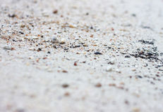 Small crab on the beach. Royalty Free Stock Photography