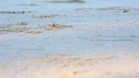 The small crab on the beach stock footage