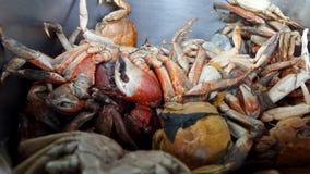 Small crab Stock Photos