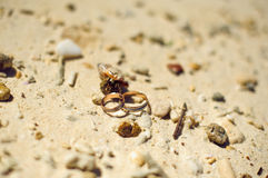 Small crab and engagement rings on the beach. Royalty Free Stock Photo