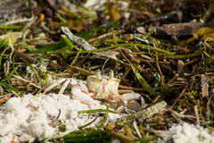 Small crab on sand beach Stock Image