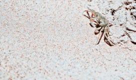 A small crab. Stock Photos