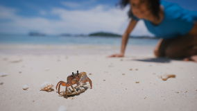Small crab stands on a rock on a sandy beach. Girl looking at marine life which then ran to her. Sea and blue sky on the stock video footage