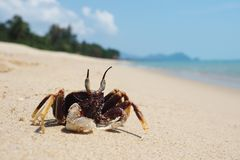 Small crab is sunbathing on the beach stock photo
